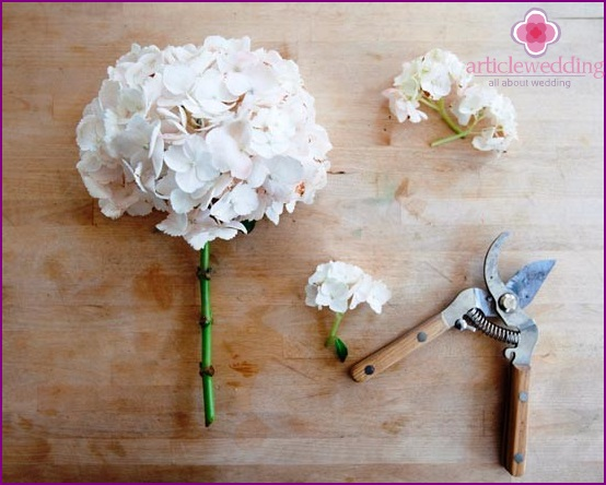 Cut the stems of hydrangeas