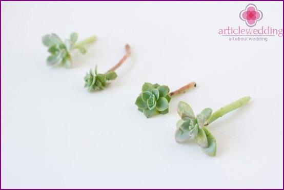 Prepare succulents