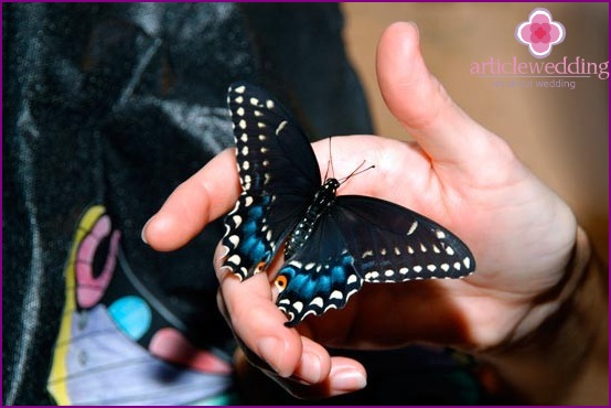 Butterflies and guests