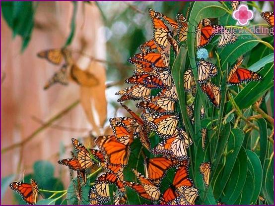 A variety of butterflies