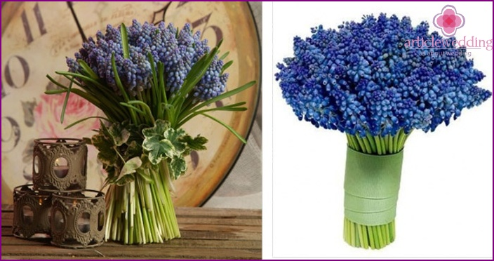 The original and unique muscari