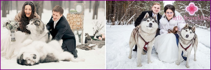 Wedding photography winter with the Huskies