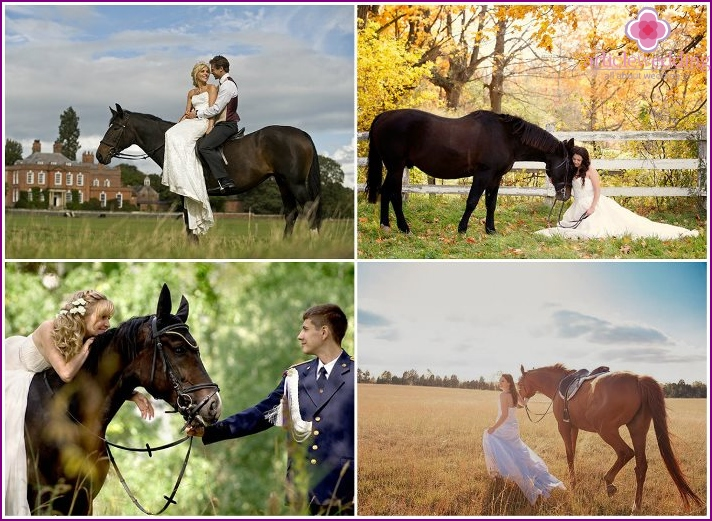 Wedding photo session with horses