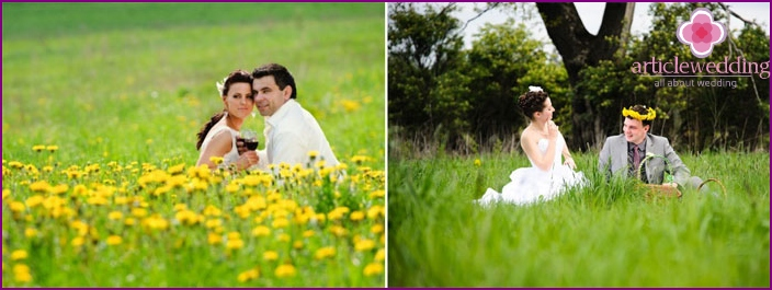 Wedding photos on the meadow with dandelions