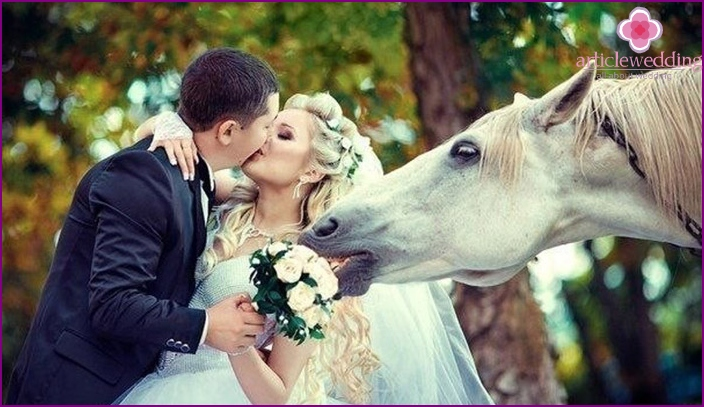 Beautiful horse decorate the wedding photo shoot
