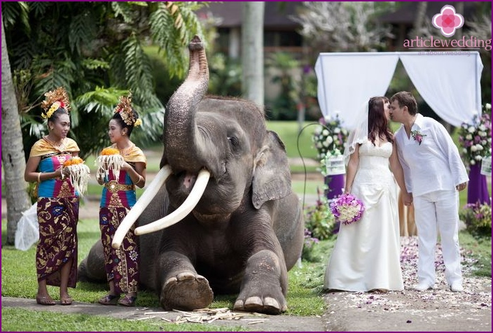 The wedding ceremony on an elephant