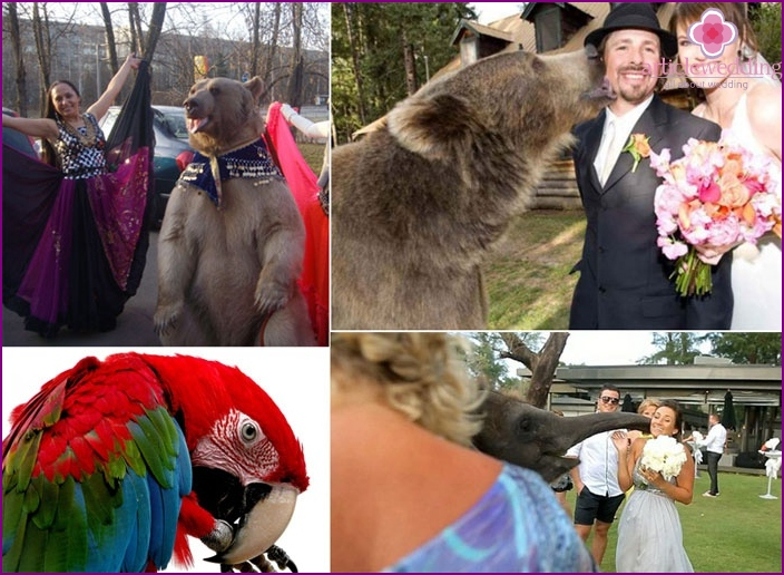 Four-legged friends - participants of the wedding show