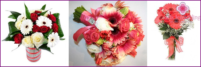 Beautiful gerbera: ideal company roses