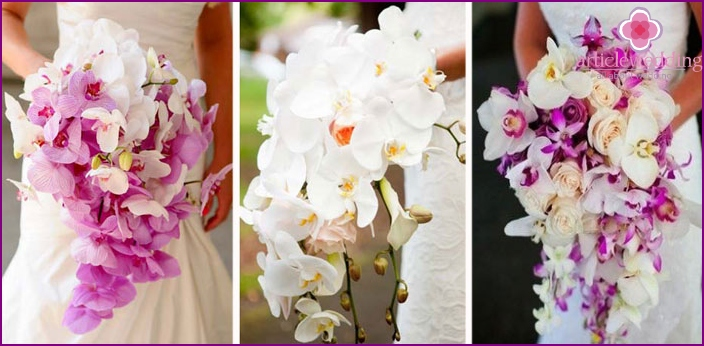 Orchids for the bride