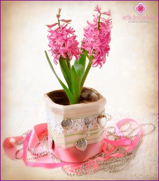 Hyacinth as a gift