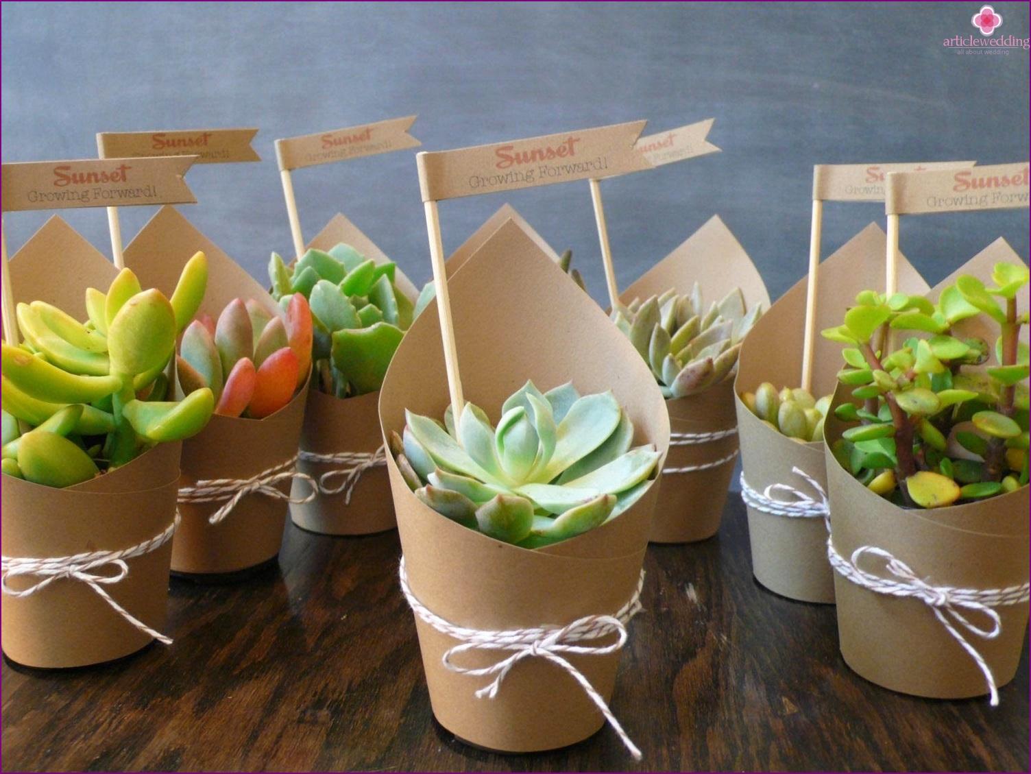 Succulents Bonbonnieres