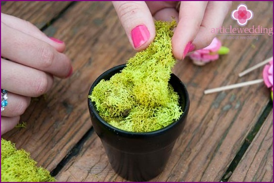 How to place moss in a pot