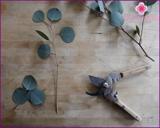 Prepare Eucalyptus Stems