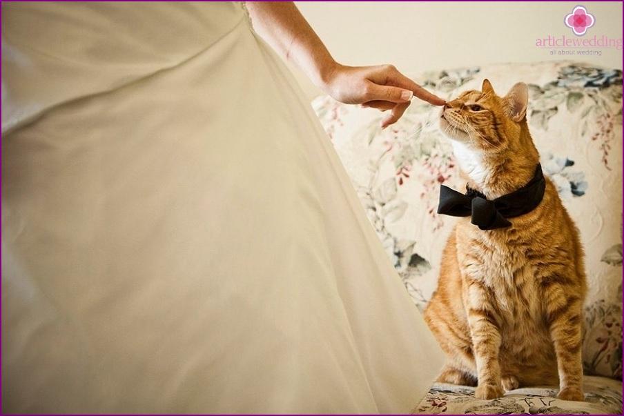 Bride with pet