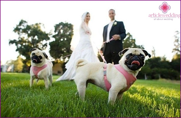 Newlyweds with pets