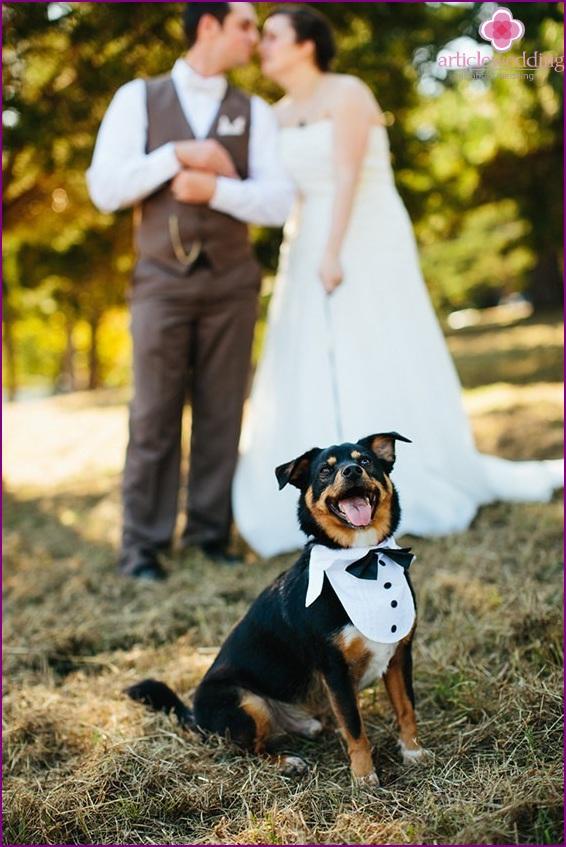 Pet at the wedding