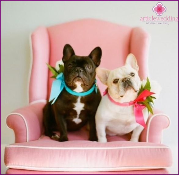 Animals at the wedding