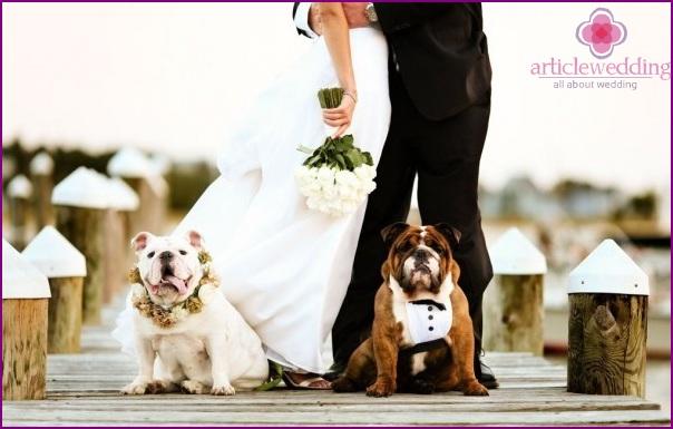 Pets at the wedding