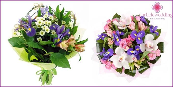 Irises and Peruvian Beauty