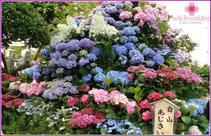 Japanese flowers during the annual festival