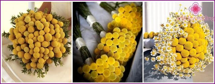 Unfading lemon craspedia in flower arrangements