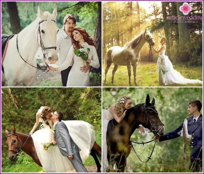 Photoset of the newlyweds with horses