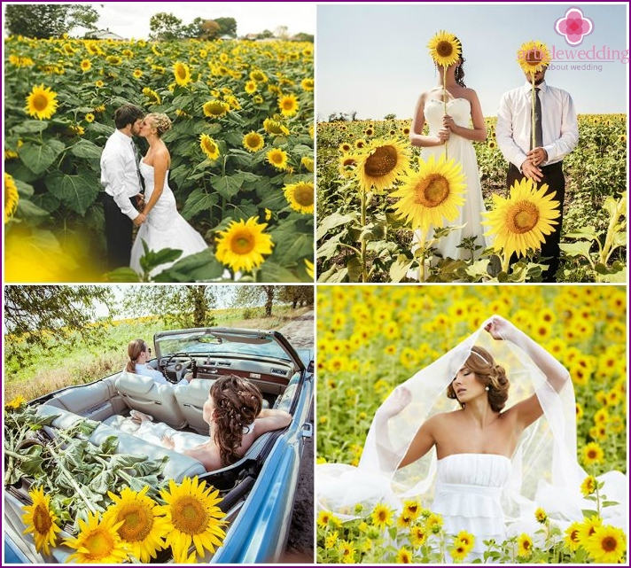 Photo of the newlyweds on the background of sunflowers