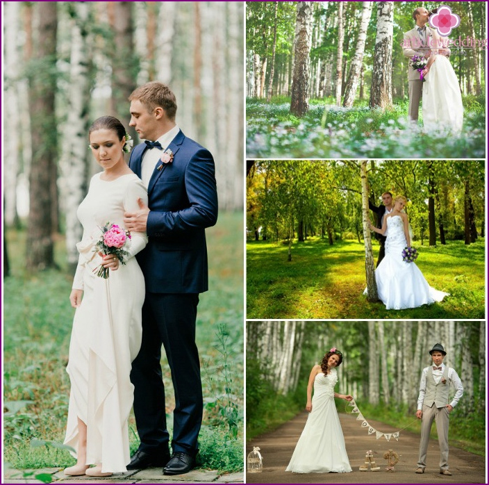 Wedding photo session in a birch grove