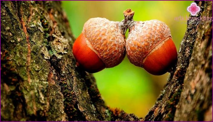 Acorns on oak