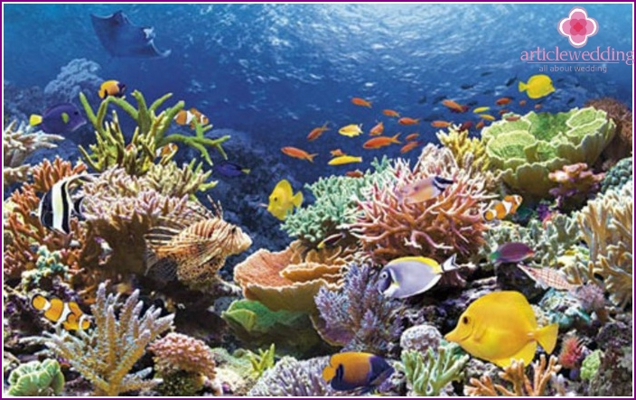 Maldivian coral reefs for a honeymoon trip