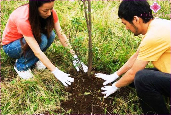 Planting a Tree on a Wooden Wedding Anniversary