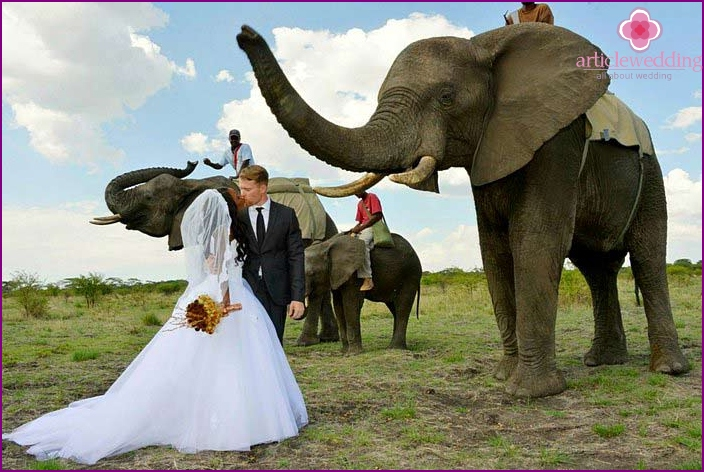 Kenyan Safari Wedding