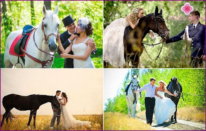 Wedding photos with horses