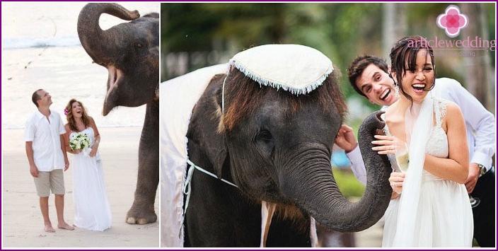 Thailändische Hochzeiten mit Elefanten