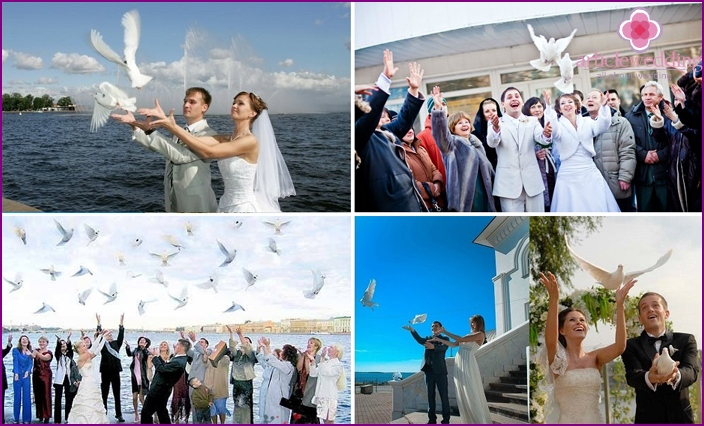 Pigeons at a wedding celebration