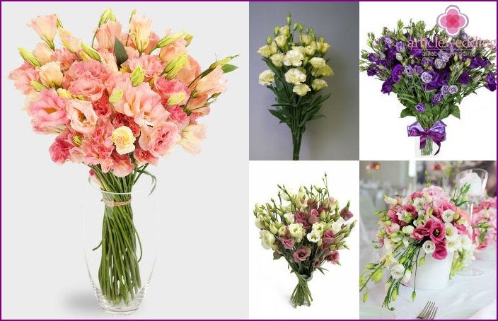 The color scheme of lisianthus