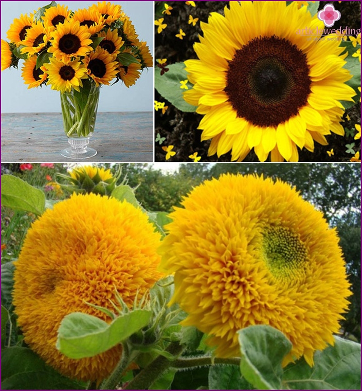 Wonderful flowers of the sun - the basis of a wedding bouquet