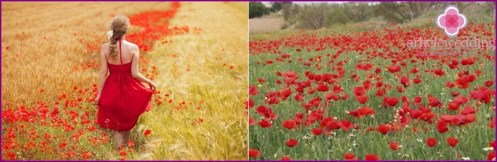 Poppies fascinate with their beauty