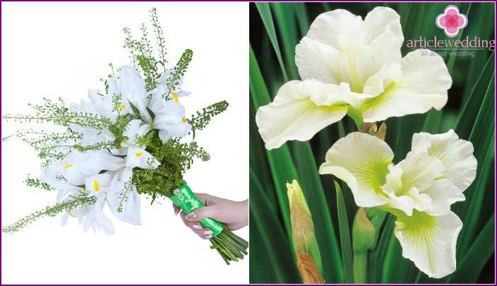 Weiße Blütenblätter mit gelbem und grünem Pigment