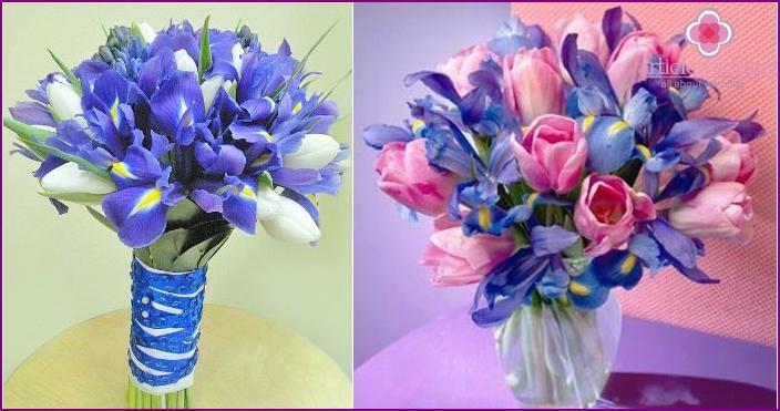 Tulpen sind eine großartige Firma für Irisblumen