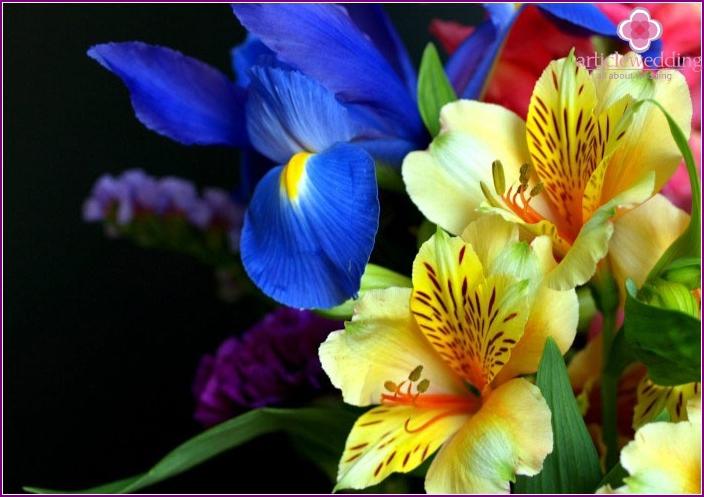Iris mit prächtigen Alstromeren