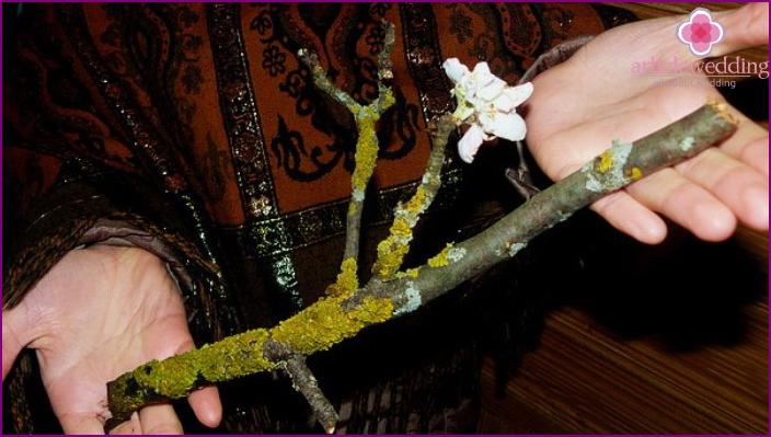 Blooming apple branch of a Caucasian shepherd