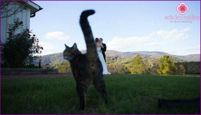 Curiosity during the 2016 wedding photo shoot